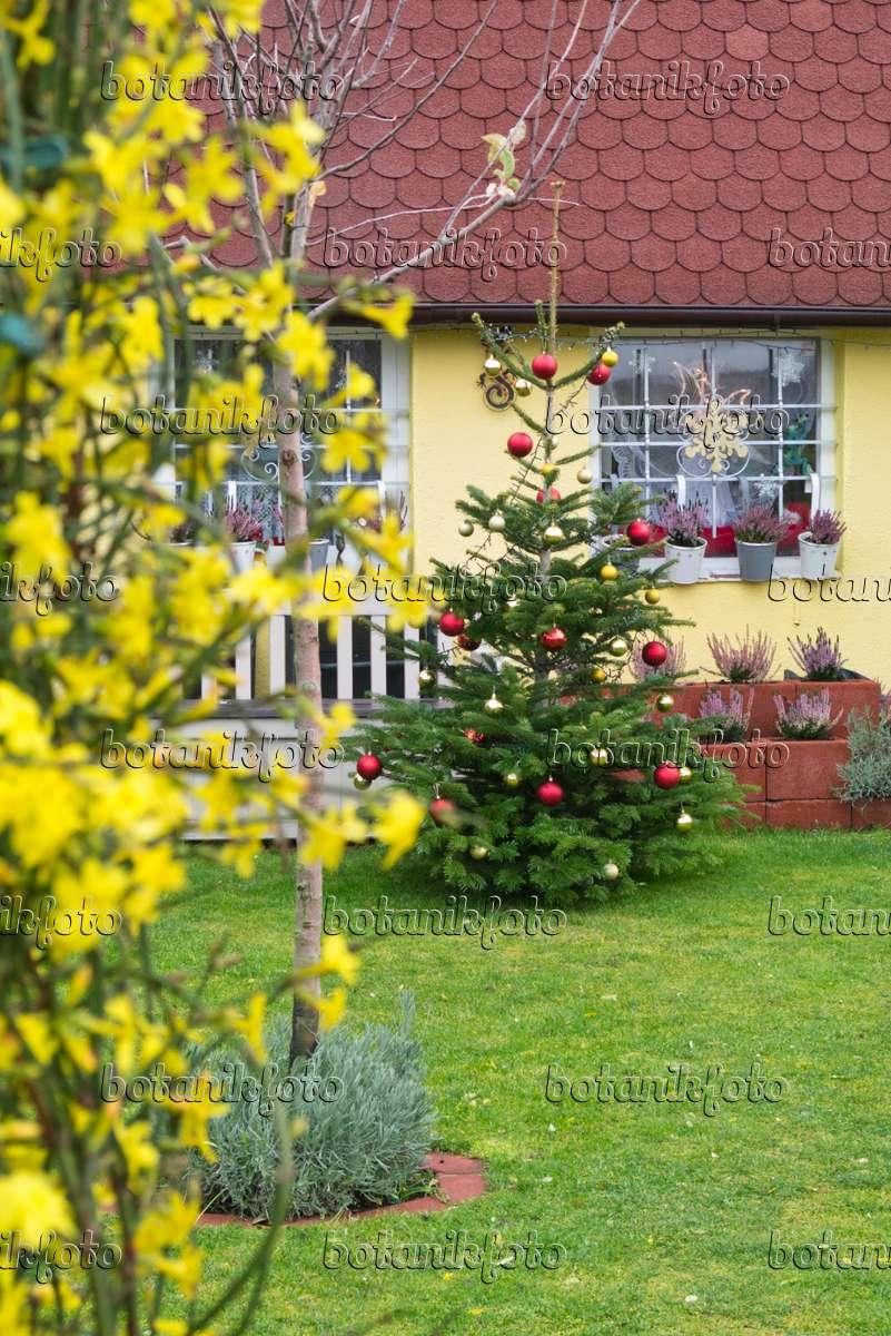 bild weihnachtsbaum in einem kleingarten 551009 bilder. Black Bedroom Furniture Sets. Home Design Ideas