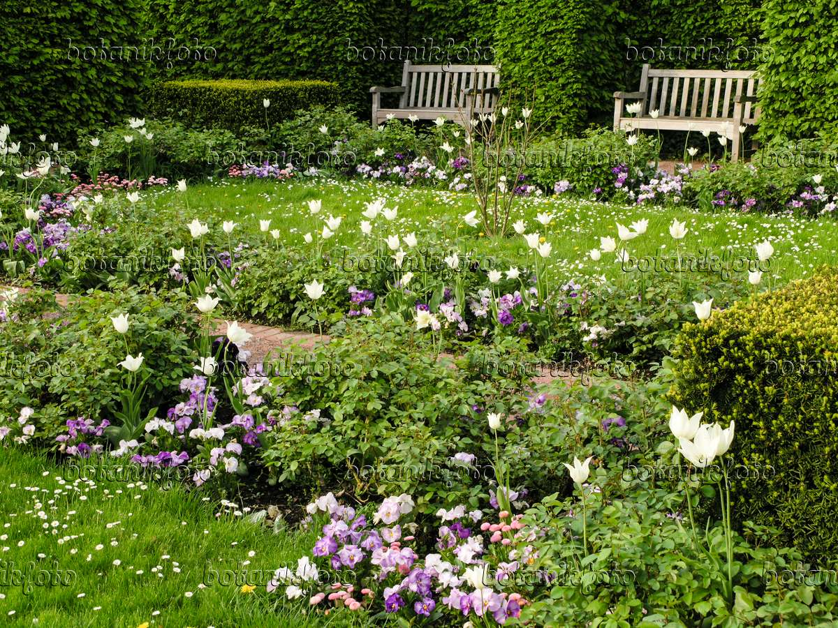 bild wei er garten mit tulpen britzer garten berlin. Black Bedroom Furniture Sets. Home Design Ideas