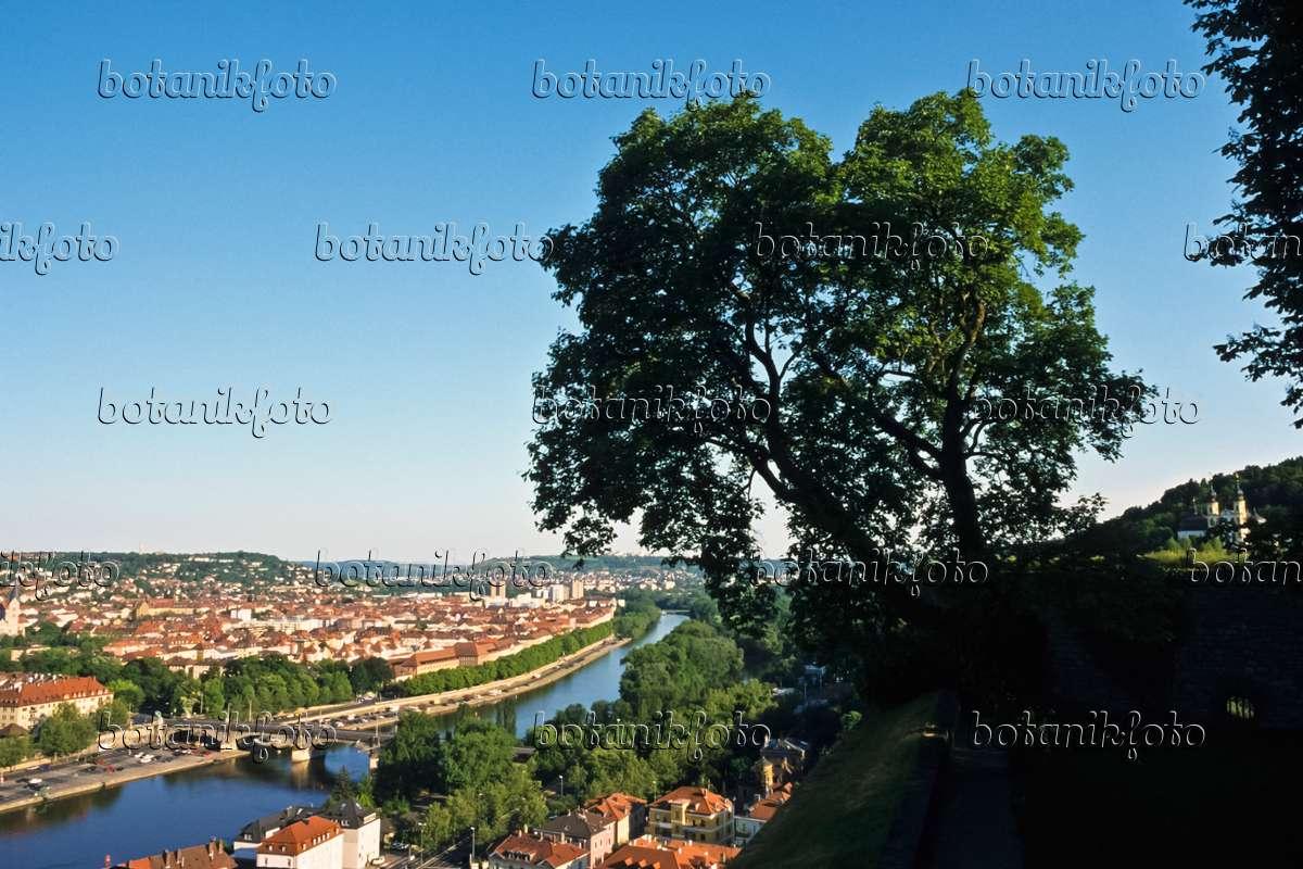 Bild w rzburg deutschland 378078 bilder und videos for Pflanzen bestellen berlin
