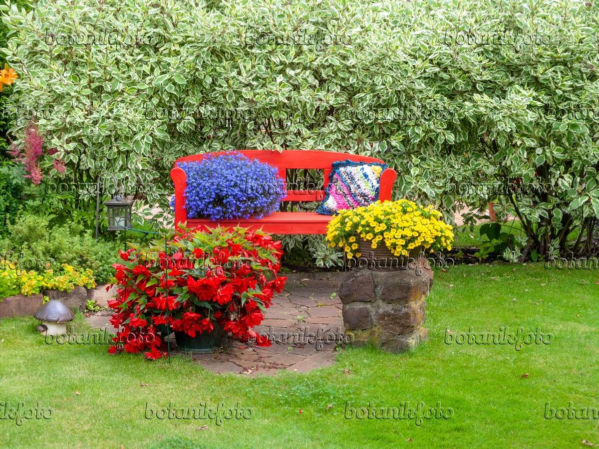 523256   Begonias (Begonia), Lobelias (Lobelia) And Calibrachoa With Red  Garden