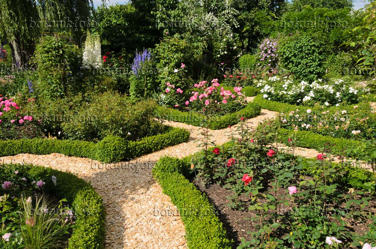Image Boxwood Hedges In A Rose Garden 534050 Images And Videos Of Plants