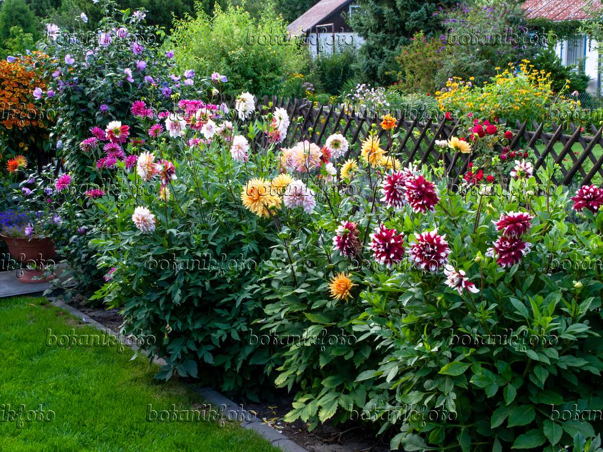 Image Dahlia Garden 463147 Images And Videos Of Plants