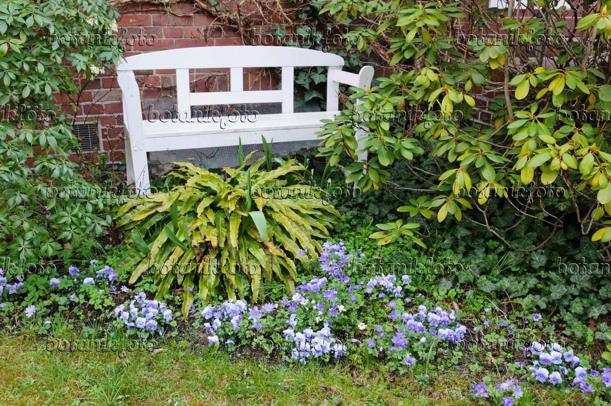Tremendous Image Front Garden With White Bench And Violets 471056 Ncnpc Chair Design For Home Ncnpcorg
