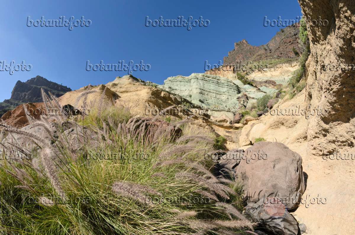 Images landscapes 15 images and videos of plants and - Los azulejos gran canaria ...