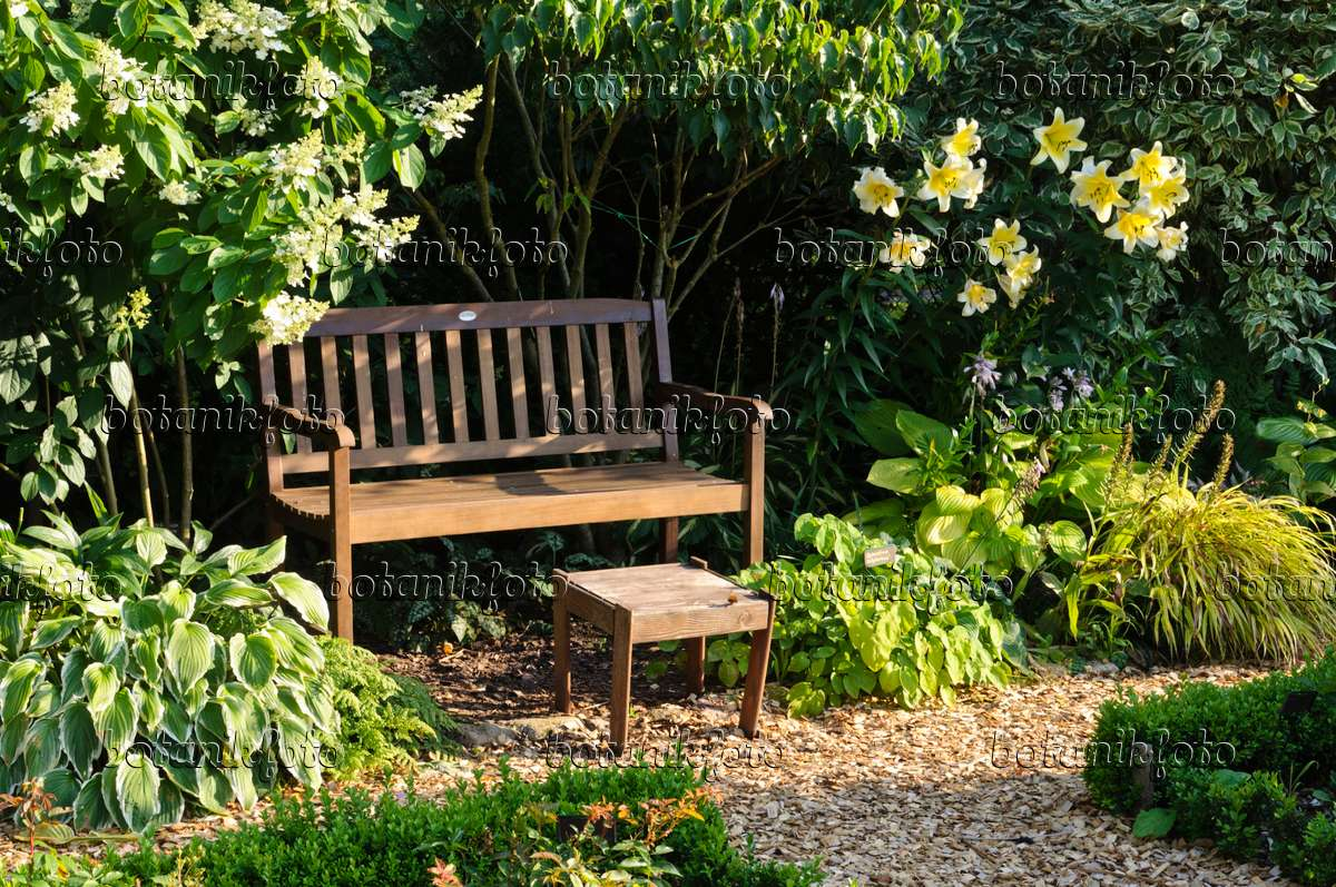 Image Garden bench with panicle hydrangea Hydrangea