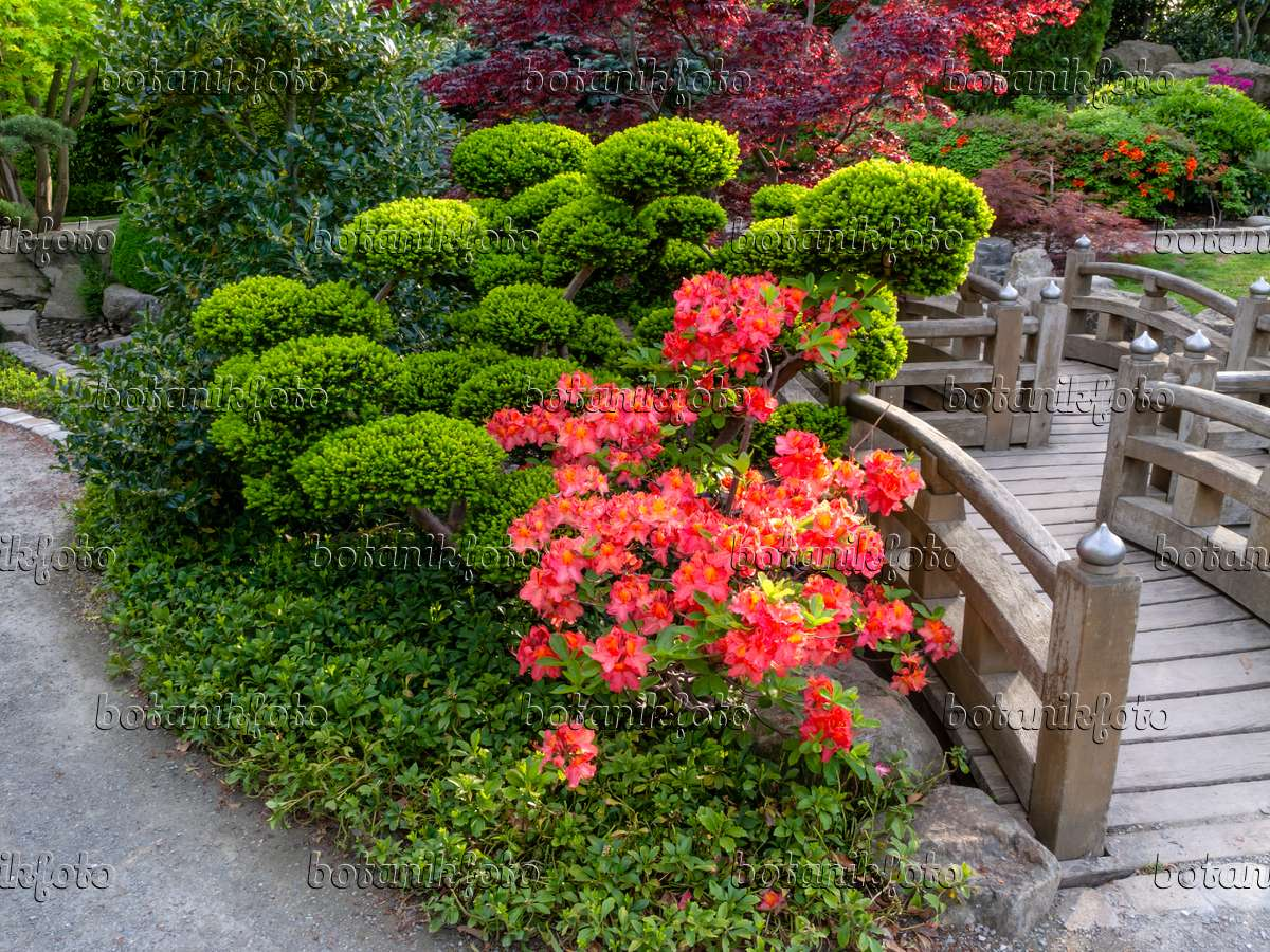 image japanese garden freiburg im breisgau germany 437311 images and videos of plants and. Black Bedroom Furniture Sets. Home Design Ideas