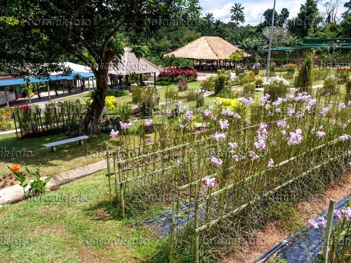 434125   Mandai Orchid Garden, Singapore