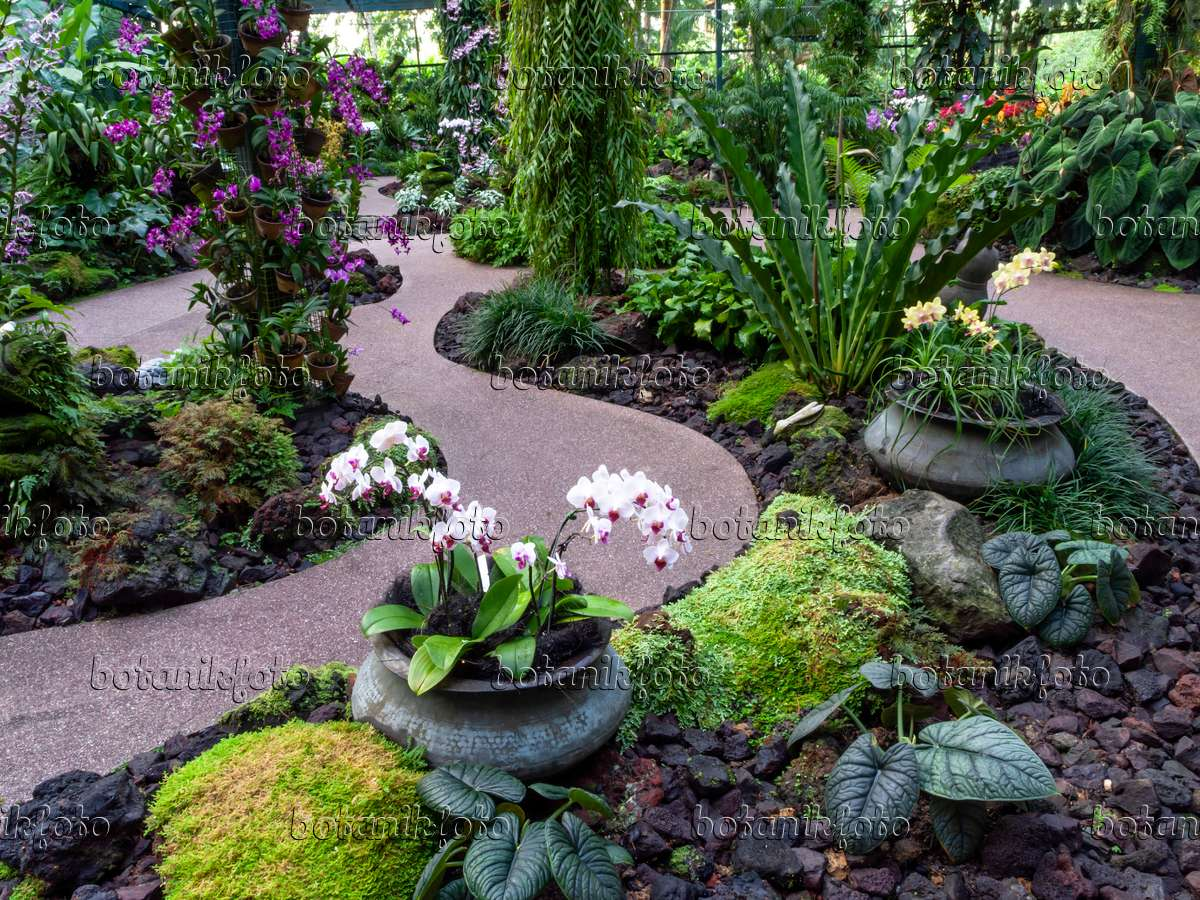 434227   National Orchid Garden, Singapore