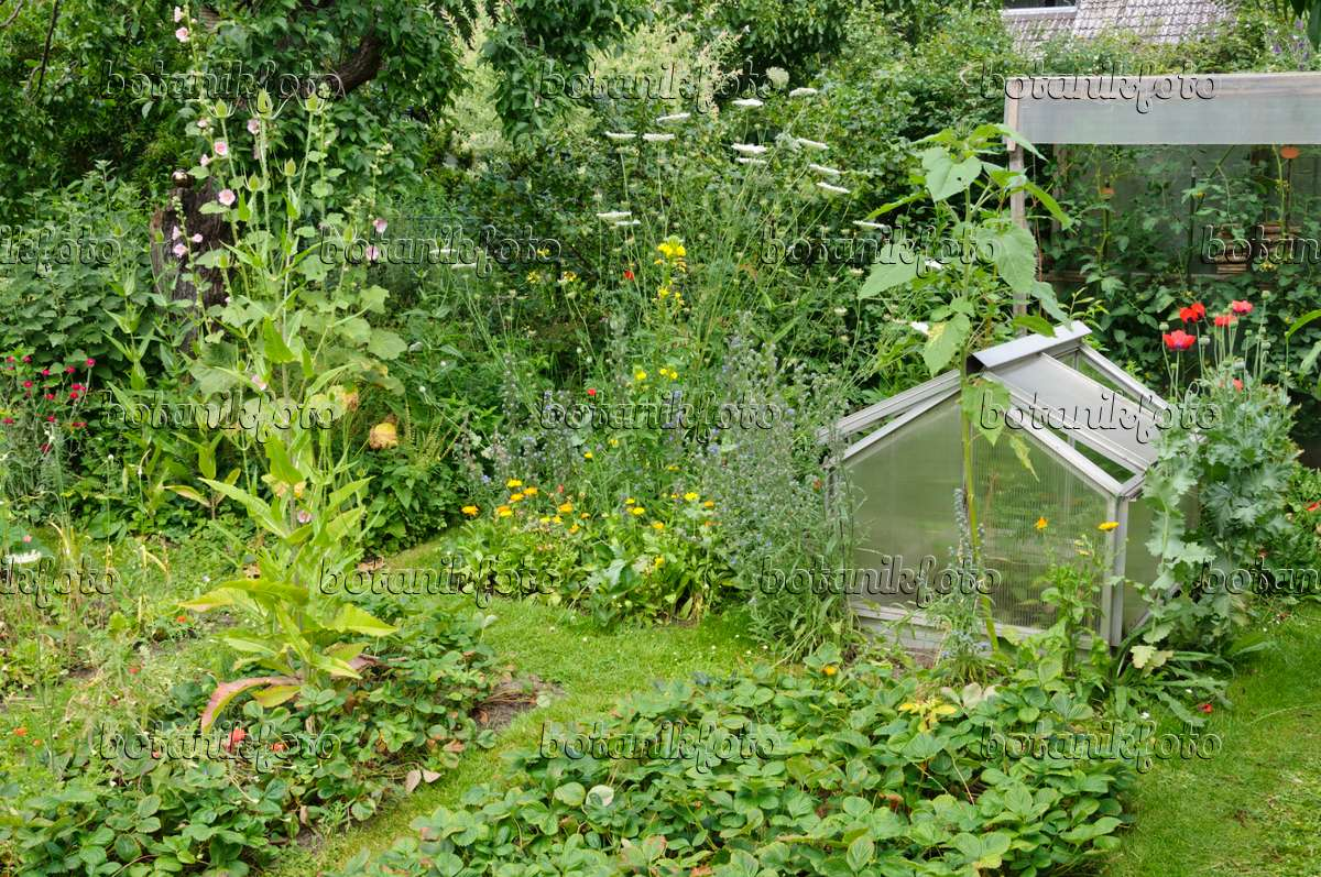 Image natural garden with fruit and vegetable beds for Fruit and vegetable garden