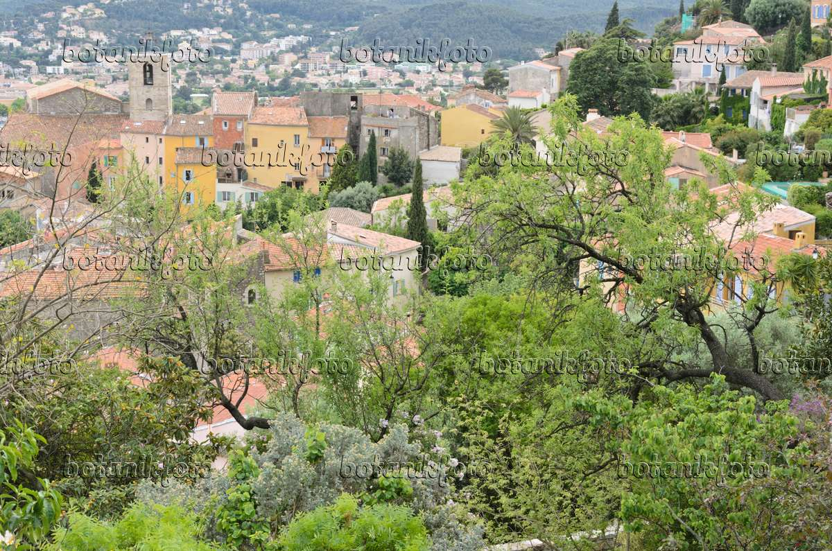 image old town hy res france 533138 images and videos of plants and gardens botanikfoto. Black Bedroom Furniture Sets. Home Design Ideas