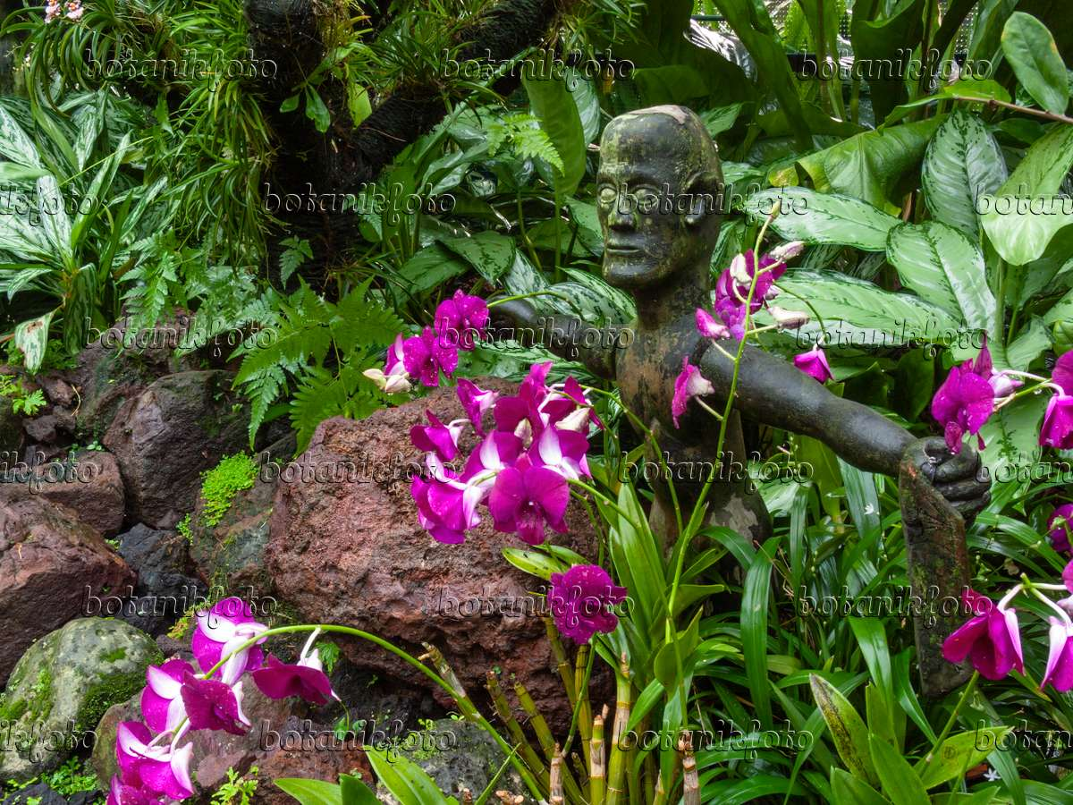... 411190   Orchid Garden With Sculpture, National Orchid Garden,  Singapore ...