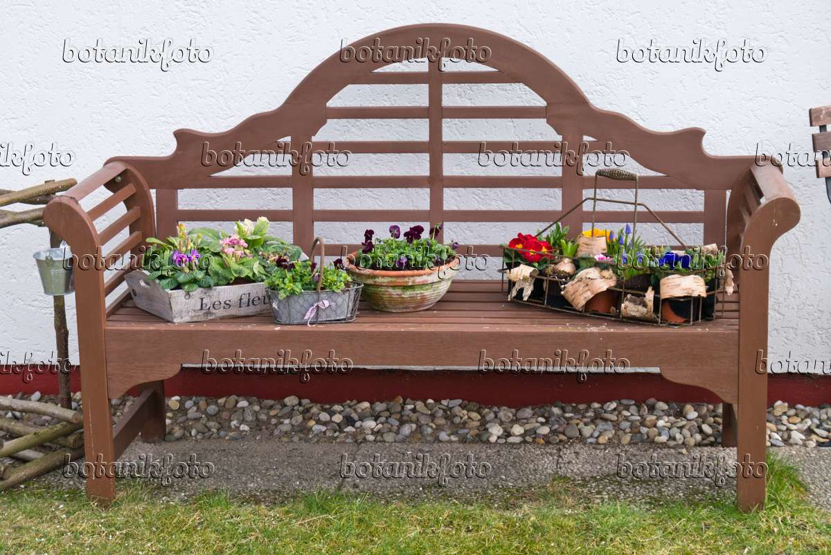 Fabulous Image Primroses Primula And Violets Viola In Pots On A Ncnpc Chair Design For Home Ncnpcorg