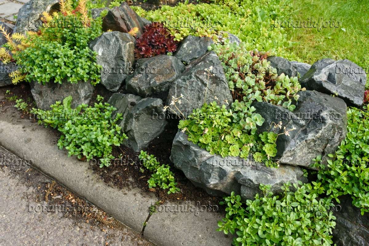 Awesome 556048   Rock Garden With Succulent Plants