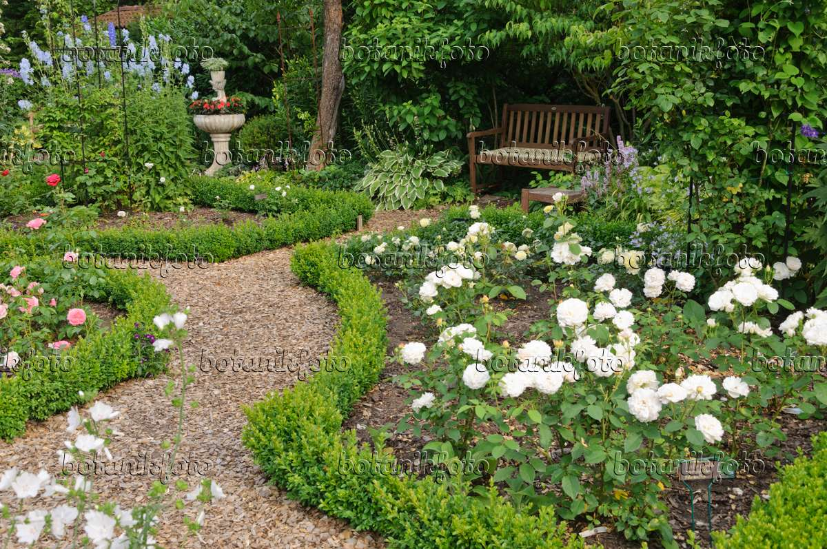 Image rose garden with box hedges planted fountain and for Formal rose garden layout