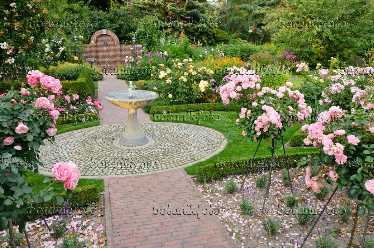 Image rose garden with granite fountain and half standard for Rose garden design