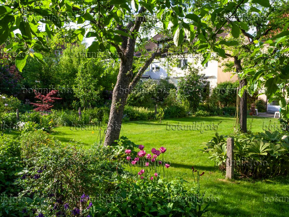 image row house garden with lawn and fruit trees 460101