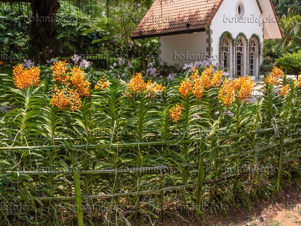 411124   Sentosa Orchid Garden, Singapore