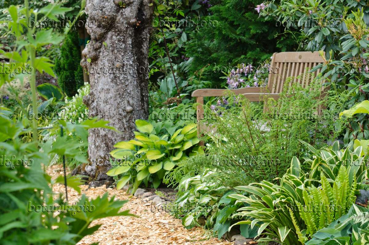 473108   Shady Garden With Hostas And Ferns