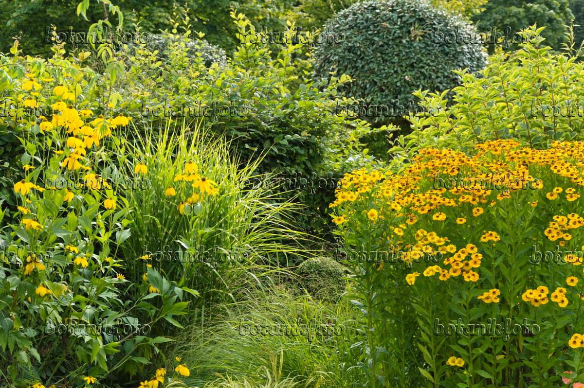 images perennial gardens 13 images and videos of plants and gardens botanikfoto. Black Bedroom Furniture Sets. Home Design Ideas