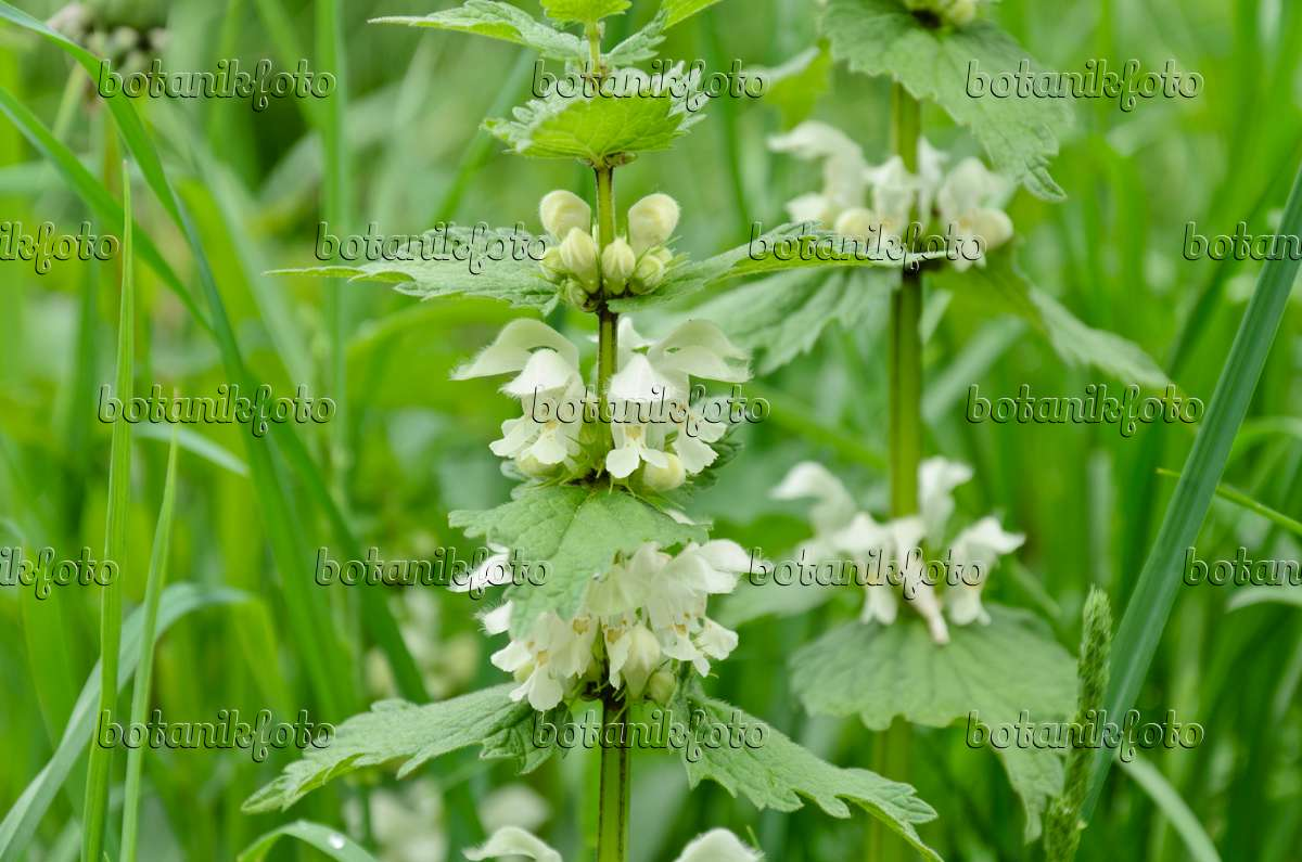 lily of the valley album download