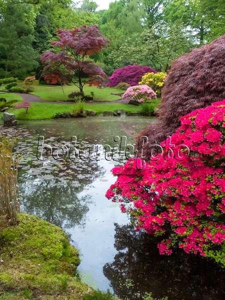 rhododendron im garten tipps zum pflanzen pflegen. Black Bedroom Furniture Sets. Home Design Ideas