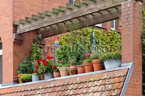 bild balkon mit k belpflanzen 475027 bilder und videos von pflanzen und g rten botanikfoto. Black Bedroom Furniture Sets. Home Design Ideas