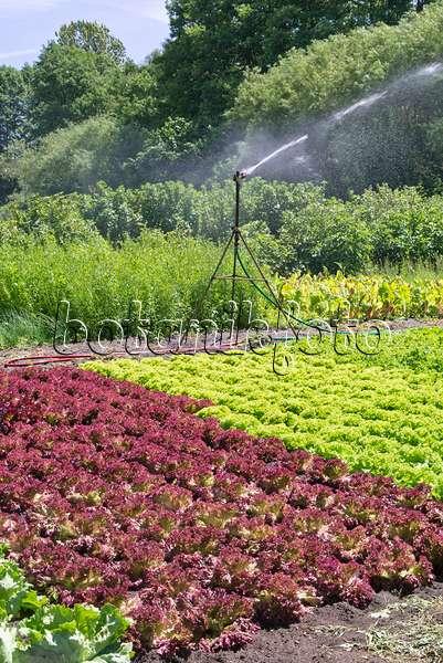 bilder gem se 14 bilder und videos von pflanzen und g rten botanikfoto. Black Bedroom Furniture Sets. Home Design Ideas