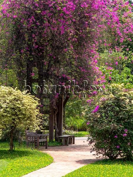 Bilder Tropische Gärten 2 - Bilder Und Videos Von Pflanzen Und ... Exotische Pflanzen Garten Bougainvillea Drillingsblume