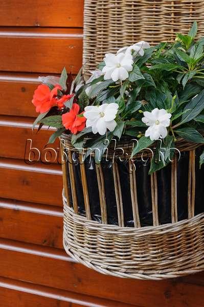 bild flei iges lieschen impatiens walleriana lobelien lobelia petunien petunia und. Black Bedroom Furniture Sets. Home Design Ideas