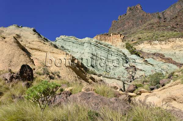 Bilder gr ser 19 bilder und videos von pflanzen und - Los azulejos gran canaria ...