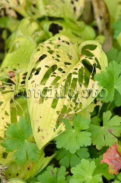 bilder wildblumen 9 bilder und videos von pflanzen und g rten botanikfoto. Black Bedroom Furniture Sets. Home Design Ideas