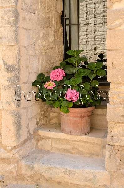 bilder t pfe und k bel 2 bilder und videos von pflanzen und g rten botanikfoto. Black Bedroom Furniture Sets. Home Design Ideas