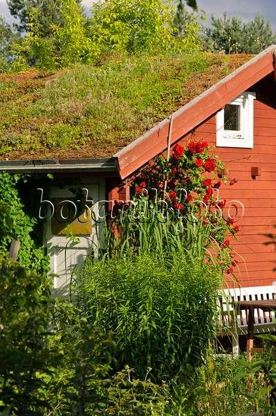 bild gartenlaube mit begr ntem dach in einem naturgarten 532026 bilder und videos von. Black Bedroom Furniture Sets. Home Design Ideas