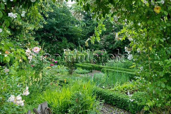 bild gem segarten mit buchshecken 464045 bilder und videos von pflanzen und g rten botanikfoto. Black Bedroom Furniture Sets. Home Design Ideas