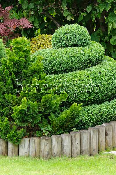 bild gew hnlicher buchsbaum buxus sempervirens in kugelform 483319 bilder und videos von. Black Bedroom Furniture Sets. Home Design Ideas