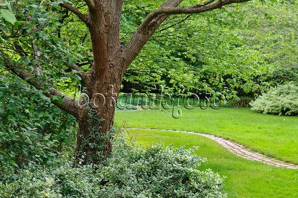 bild gew hnlicher trompetenbaum catalpa bignonioides 427137 bilder und videos von pflanzen. Black Bedroom Furniture Sets. Home Design Ideas