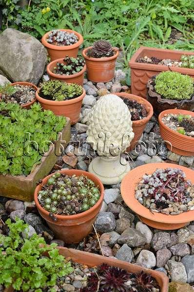 bild topfgarten mit sukkulenten 474137 bilder und videos von pflanzen und g rten botanikfoto. Black Bedroom Furniture Sets. Home Design Ideas