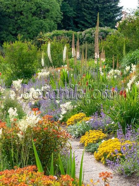 bild himalaja steppenkerze eremurus himalaicus 508217 bilder und videos von pflanzen und. Black Bedroom Furniture Sets. Home Design Ideas