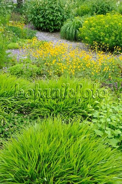 bilder gr ser 14 bilder und videos von pflanzen und g rten botanikfoto. Black Bedroom Furniture Sets. Home Design Ideas