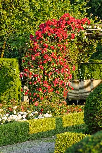 bild rosengarten mit buchshecken 497216 bilder und videos von pflanzen und g rten botanikfoto. Black Bedroom Furniture Sets. Home Design Ideas