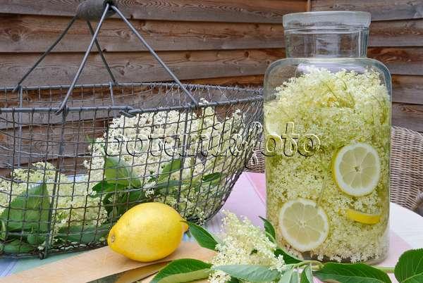 bild schwarzer holunder sambucus nigra und zitronen citrus limon f r die zubereitung von. Black Bedroom Furniture Sets. Home Design Ideas