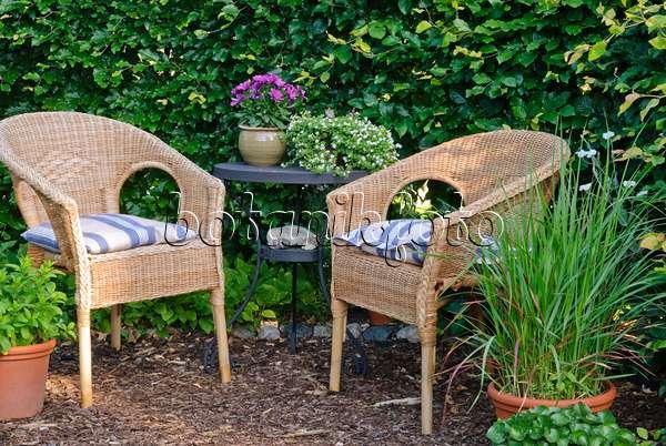 bild sitzplatz vor einer buchenhecke 500219 bilder und videos von pflanzen und g rten. Black Bedroom Furniture Sets. Home Design Ideas