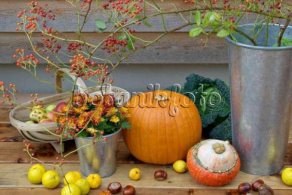 bild zierk rbis cucurbita chrysantheme chrysanthemum weizen triticum aestivum und. Black Bedroom Furniture Sets. Home Design Ideas