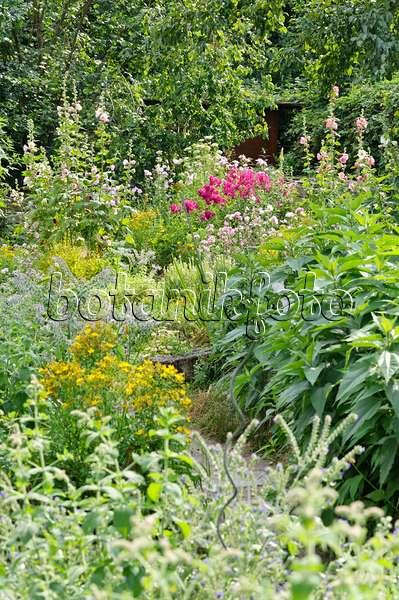 bild stockrosen alcea rosea und phlox phlox 462165 bilder und videos von pflanzen und. Black Bedroom Furniture Sets. Home Design Ideas