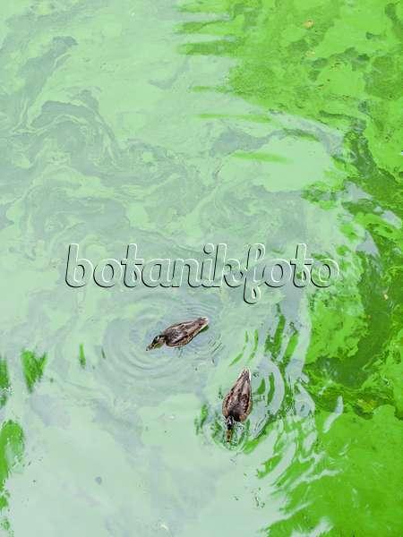 Bilder seen bilder und videos von pflanzen und g rten for Blaualgen im garten