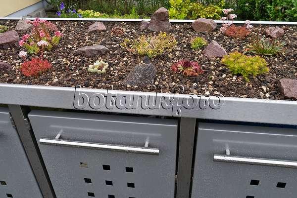 bild sukkulenten auf einer m lltonnenbox aus metall 534266 bilder und videos von pflanzen. Black Bedroom Furniture Sets. Home Design Ideas
