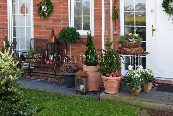 bild vorgarten mit k belpflanzen und weihnachtsdekoration 527034 bilder und videos von. Black Bedroom Furniture Sets. Home Design Ideas
