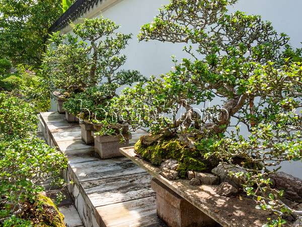 Images Bonsai gardens Images and videos of plants and gardens