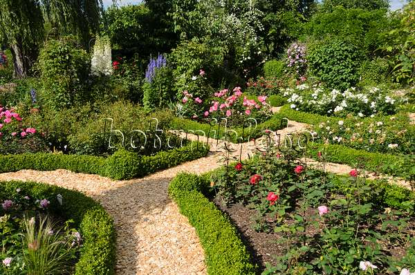 Image Roses Rosa Boxwoods Buxus And Rhododendrons