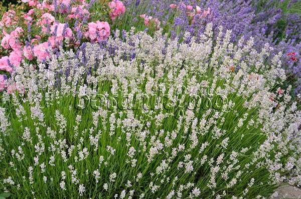 80 plants edible perennials pdf